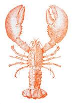 Lobster | Carreaux-Thuilliez Cecile