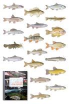 Illustrations de poissons d'eau douce. | Laurent Stefano