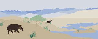 Le Tapir des Andes pour Nidoo