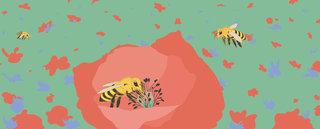 L'abeille pour Nidoo