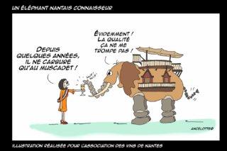 Un éléphant nantais connaisseur