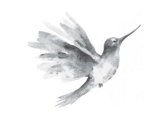 Sticker mural colibri