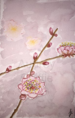 Aquarelle_Cherry_flowers