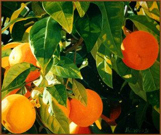 Oranger corse