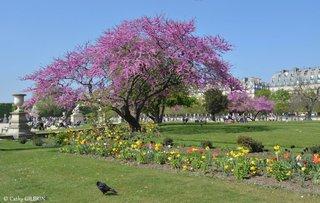 Jaridin des Tuileries Paris