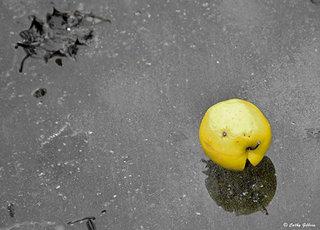 Pomme sur lac gelé