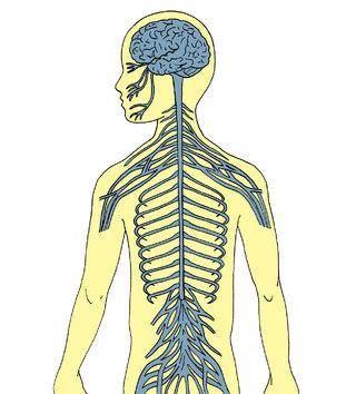 Illustration scientifique pour livre enfant
