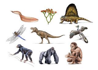 Organismes divers