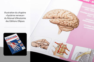 Anatomie du système nerveux