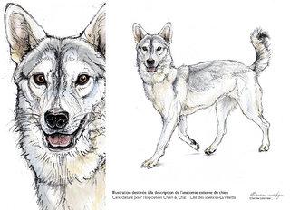 Anatomie externe du chien