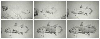 """animation de l'effet """"crayonné"""" des animaux de la branche des vertébrés pour le film : LE COELACANTHE, PLONGEE VERS NOS ORIGINES"""