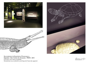 Reconstitutions de Thoracosaurus et Roxochelys