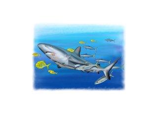 Symbiose requins/poissons divers