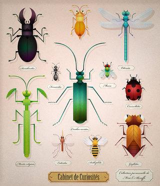 Insectes géométriques