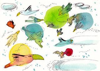- oiseaux -