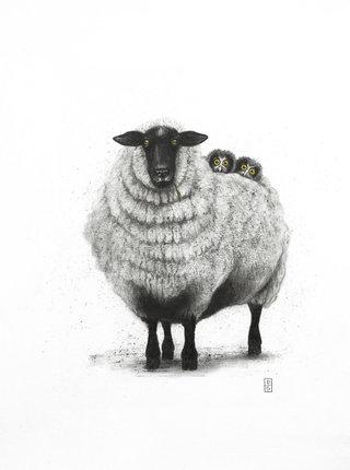 Le mouton et les chouettes boréales