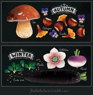 Herbier des saisons