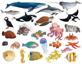 Les animaux de l'océan
