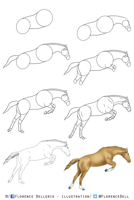 Florence dellerie illustratrice scientifique naturaliste portfolio chevaux - Frison qui saute ...