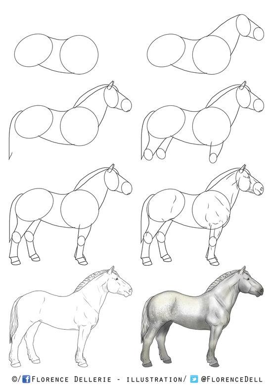 Florence dellerie illustratrice naturaliste portfolio chevaux - Apprendre a dessiner des chevaux ...