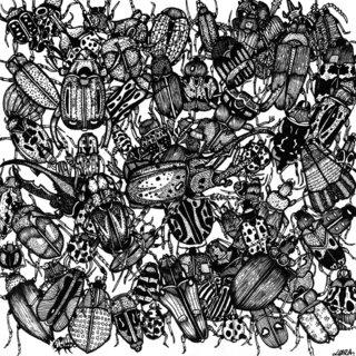Black Bugs