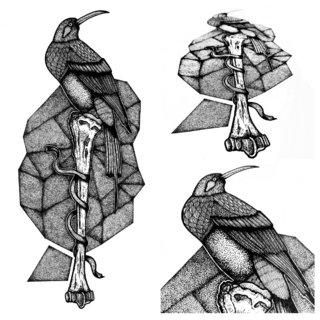 Bird & Bones