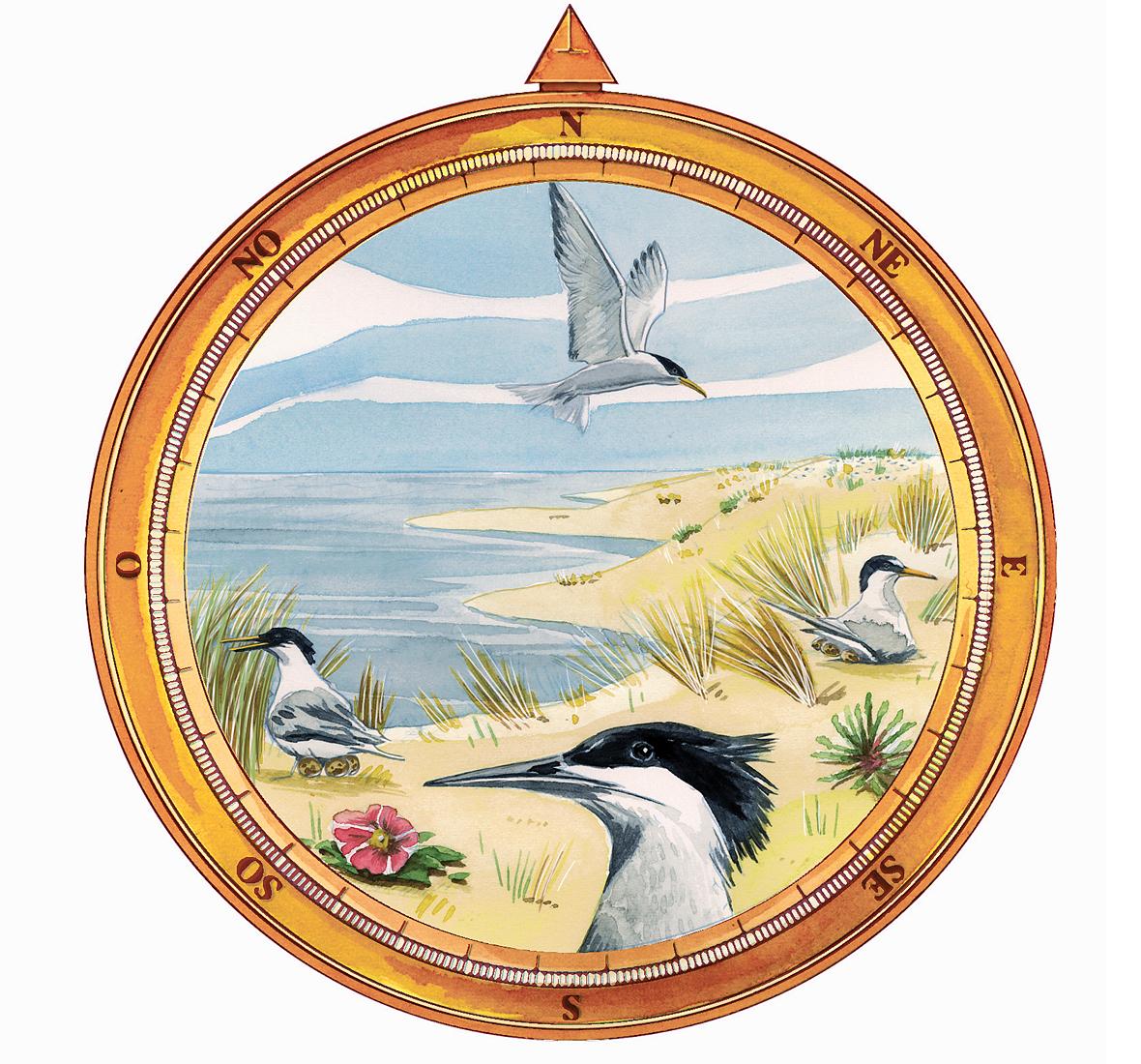 Écosite du Bourgailh (33)