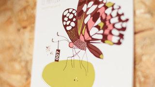 Kiwi le papillon