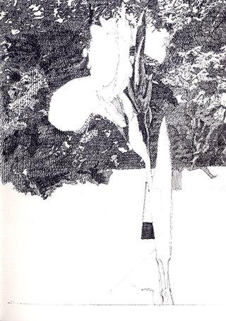 fleur 3, 2010, stylo sur papier, 20,9x14,7 cm