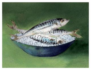 Maquereaux / Mackerels