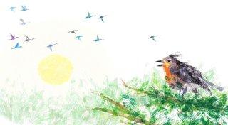 Pavone le roi des oiseaux