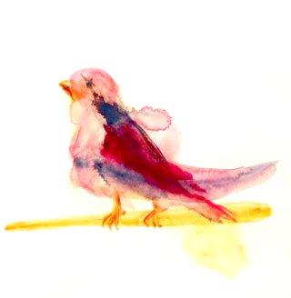 oiseau con.png