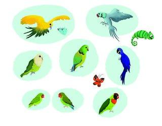 Oiseaux d'Amérique du Sud