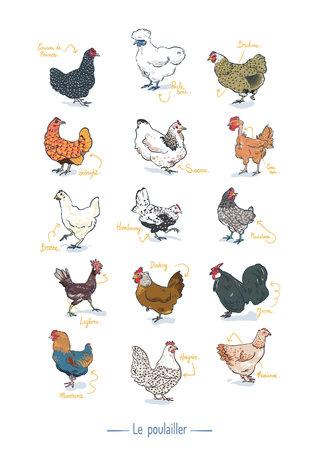 poster races de poules