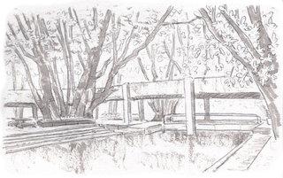 pencil ait trees.jpg