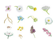 Graines et fleurs