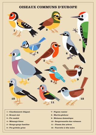 birdsofeurope-1.jpg