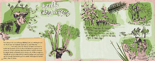 Espinassous et les arbres