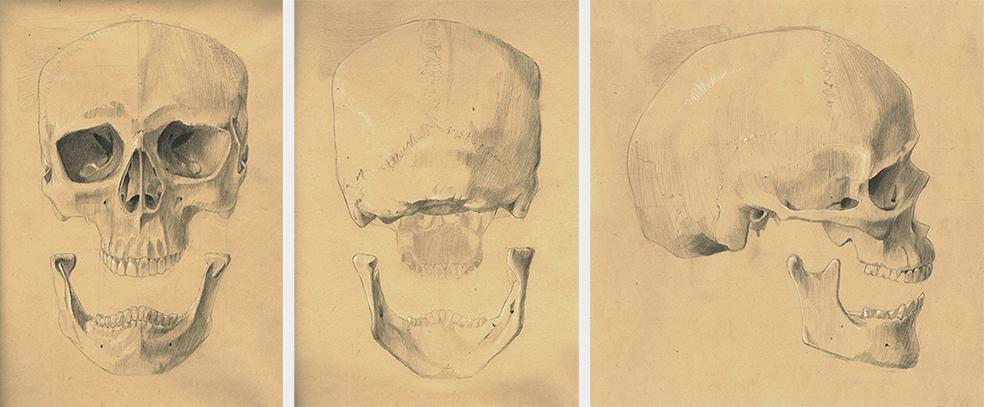 Crâne<br/><span>Graphite et craie blanche sur papier teinté.</span>