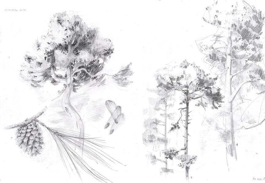 &amp;#8240;tude sur les structure des pins<br/><span>Graphite sur papier</span>