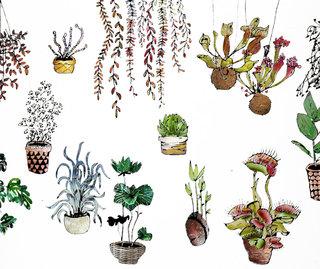 planche cactus #2