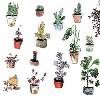 planche cactus #1