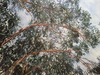 Eucalyptus dans le vent