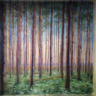 Les pins sur la dune
