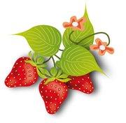 fraises.png