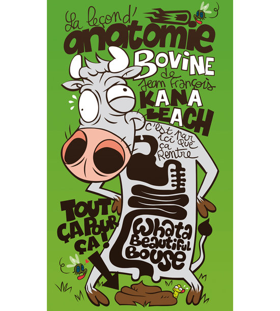 anatomie bovine