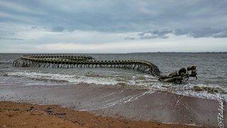 Squelette de serpent marin