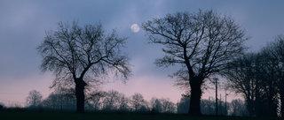 La lune et les arbres