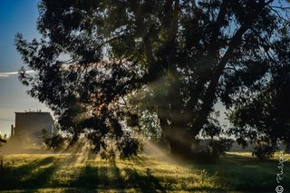 Aura matinale